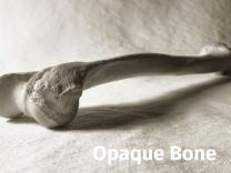 Squid Opaque Bone (137 cm x 25 m)